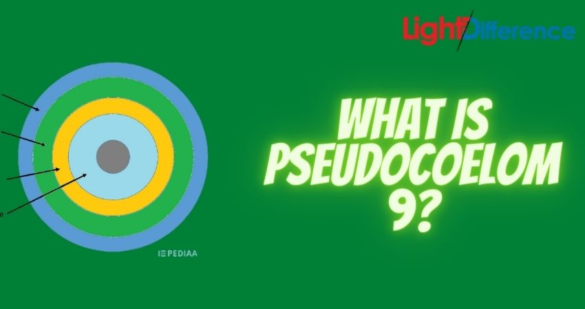 What is Pseudocoelom 9